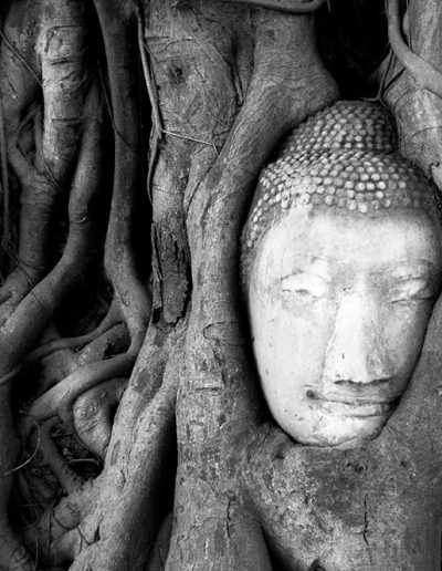 Buddha and Tree, Thailand